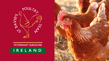 St David's Poultry Team Ireland